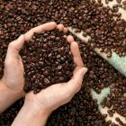 Every day we roast our bean to order. Enjoy the difference of fresh roasted coffee .